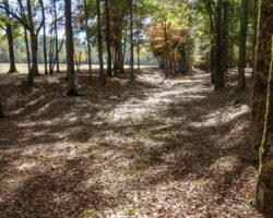 Cherokee Path
