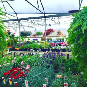 Wyatts Greenhouse and Garden Center