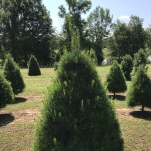 davenports tree farm